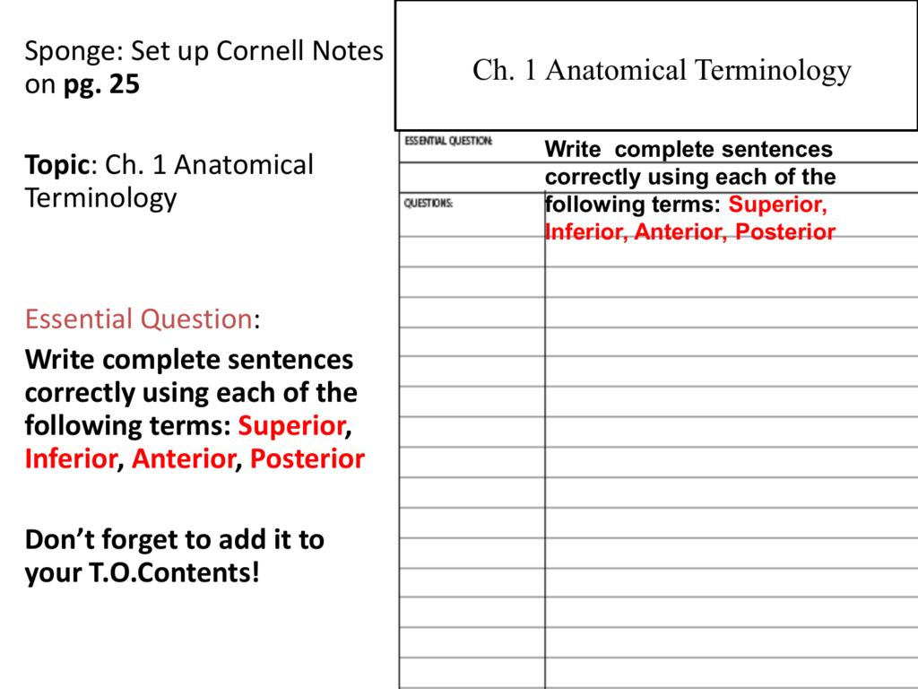 Uncategorized Anatomical Terminology Worksheet