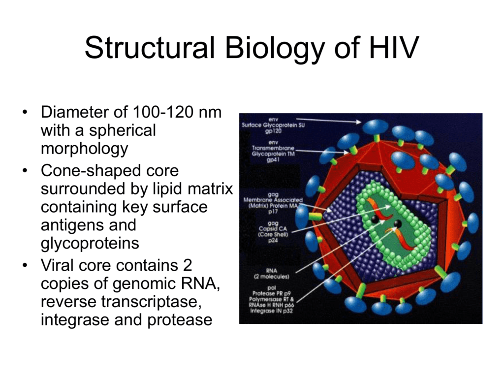Structural Biology Of Hiv