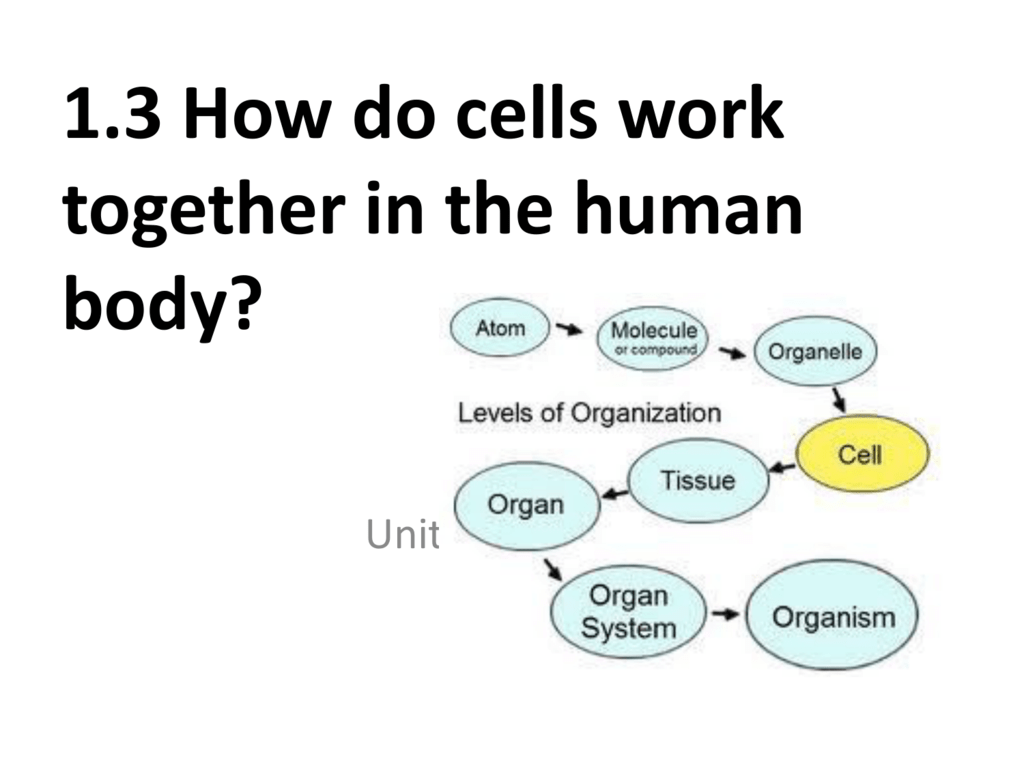 Powerpoint Cells Tissues Organs Systems Part 1