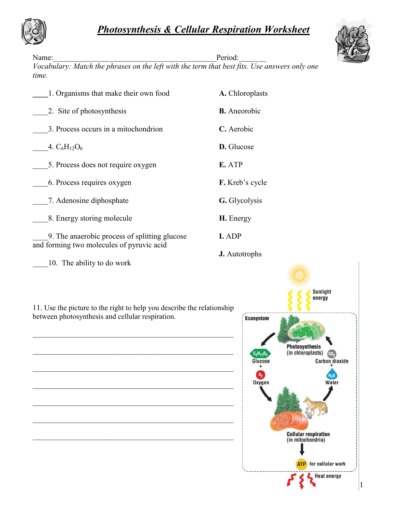 Photosynthesis Amp Respiration Worksheet
