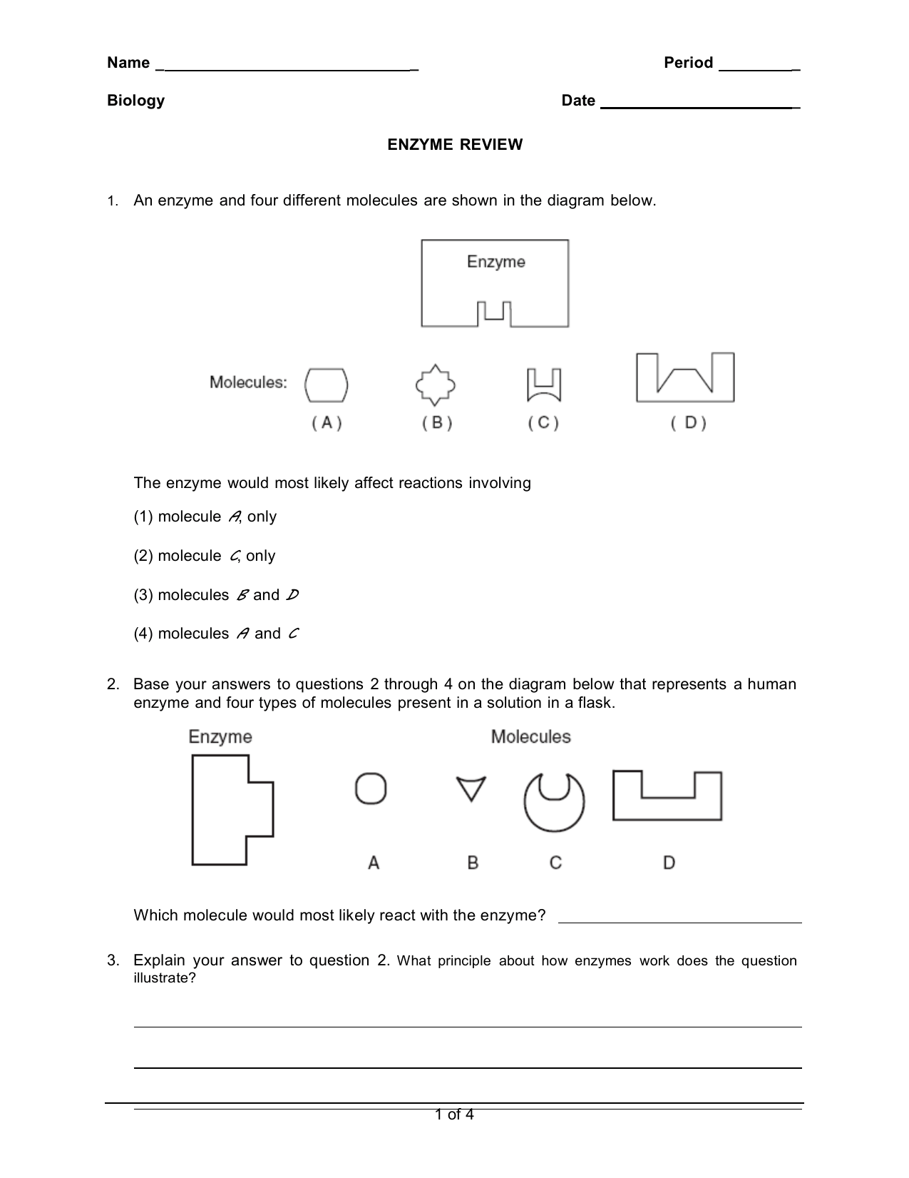 Enzyme Review Worksheet Answers