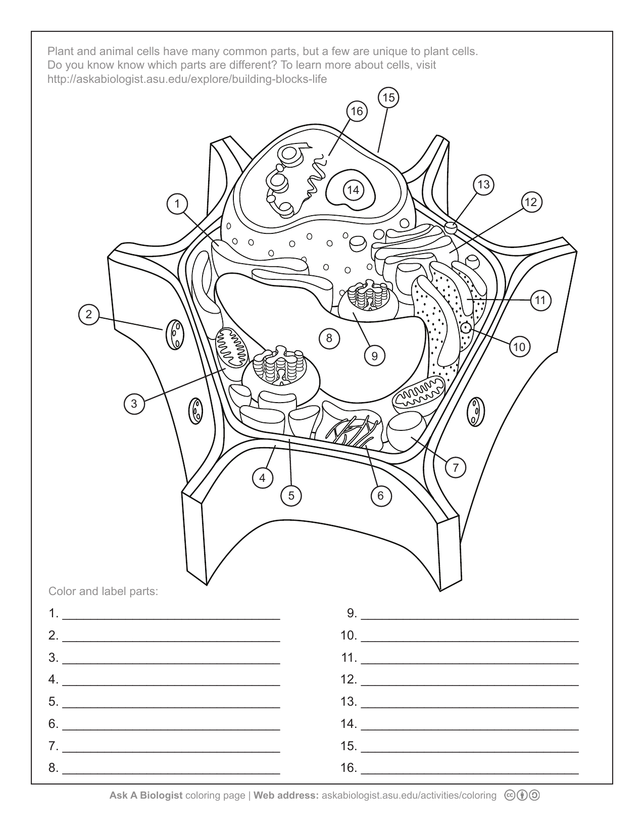 Aab Plant Cell Worksheet