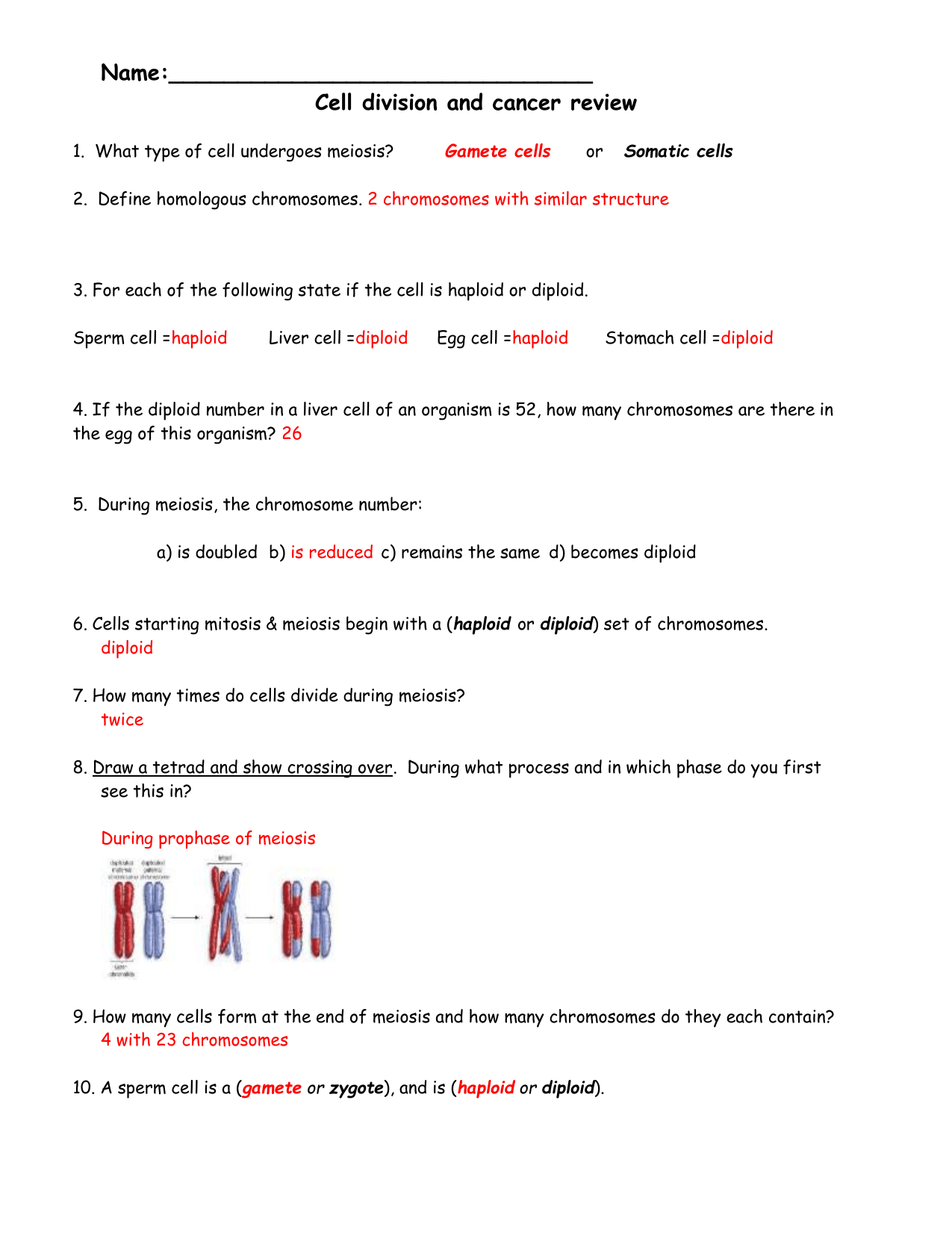 Cell Division And Cancer Review Sheet Answers 1