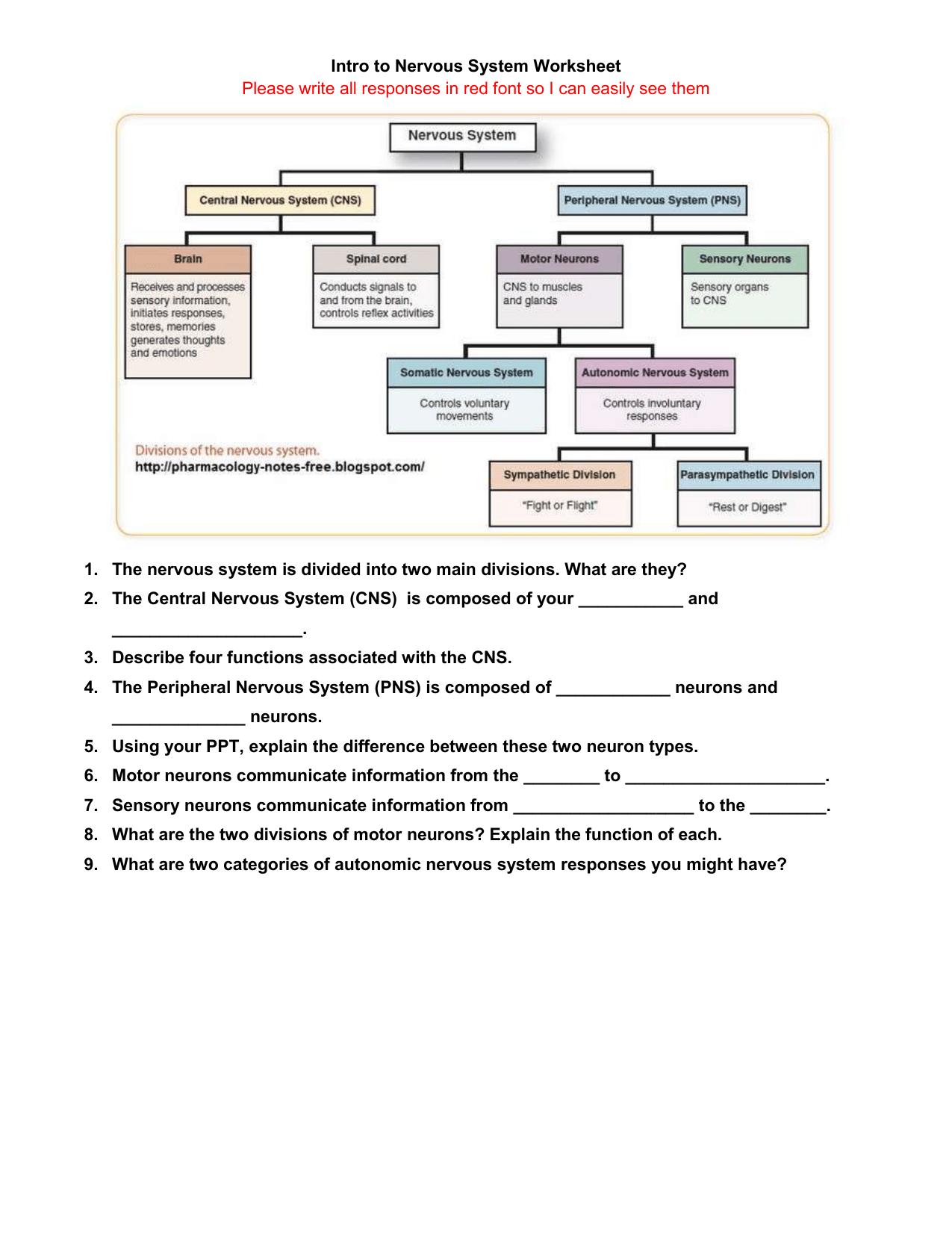 Intro To Nervous System Worksheet