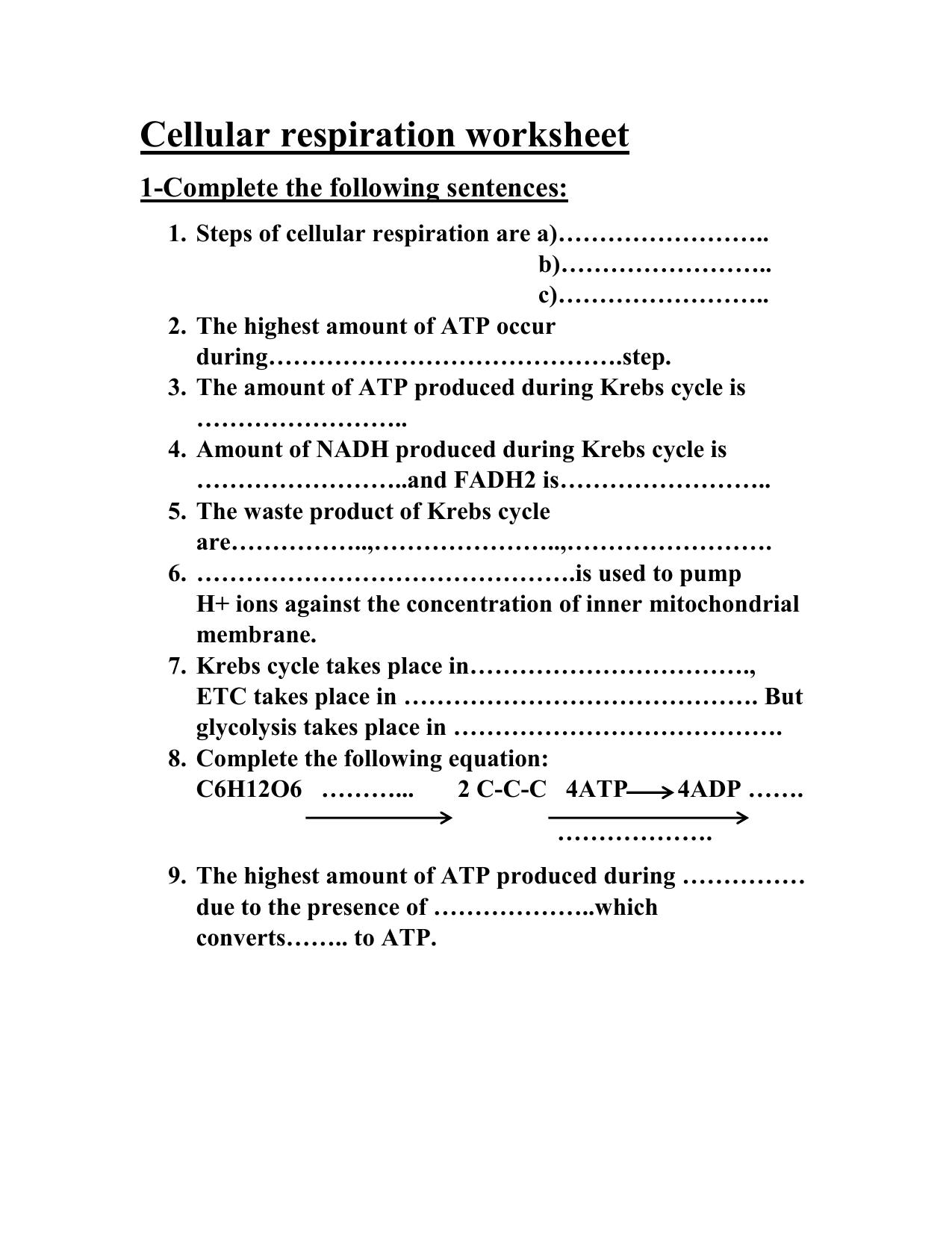 Cellular Respiration Worksheet