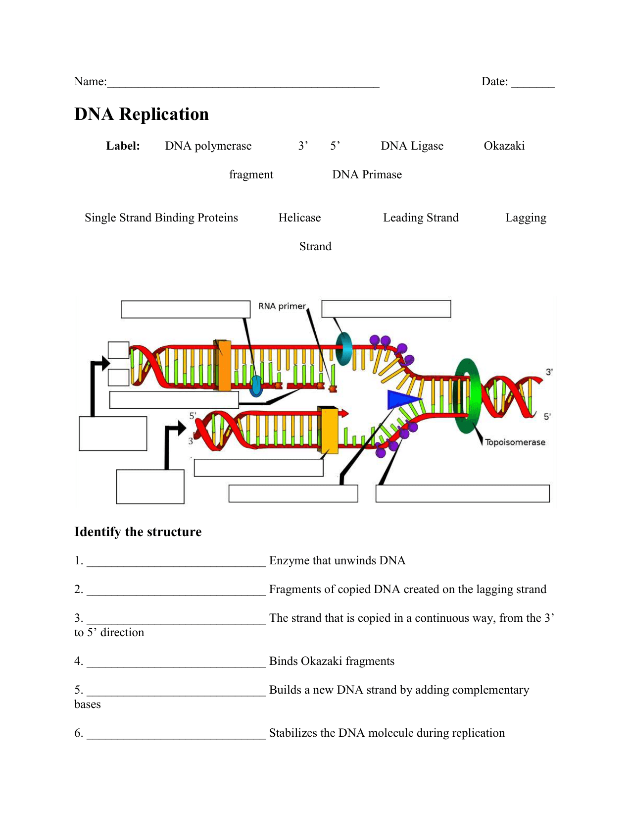 Dna Replication Worksheet