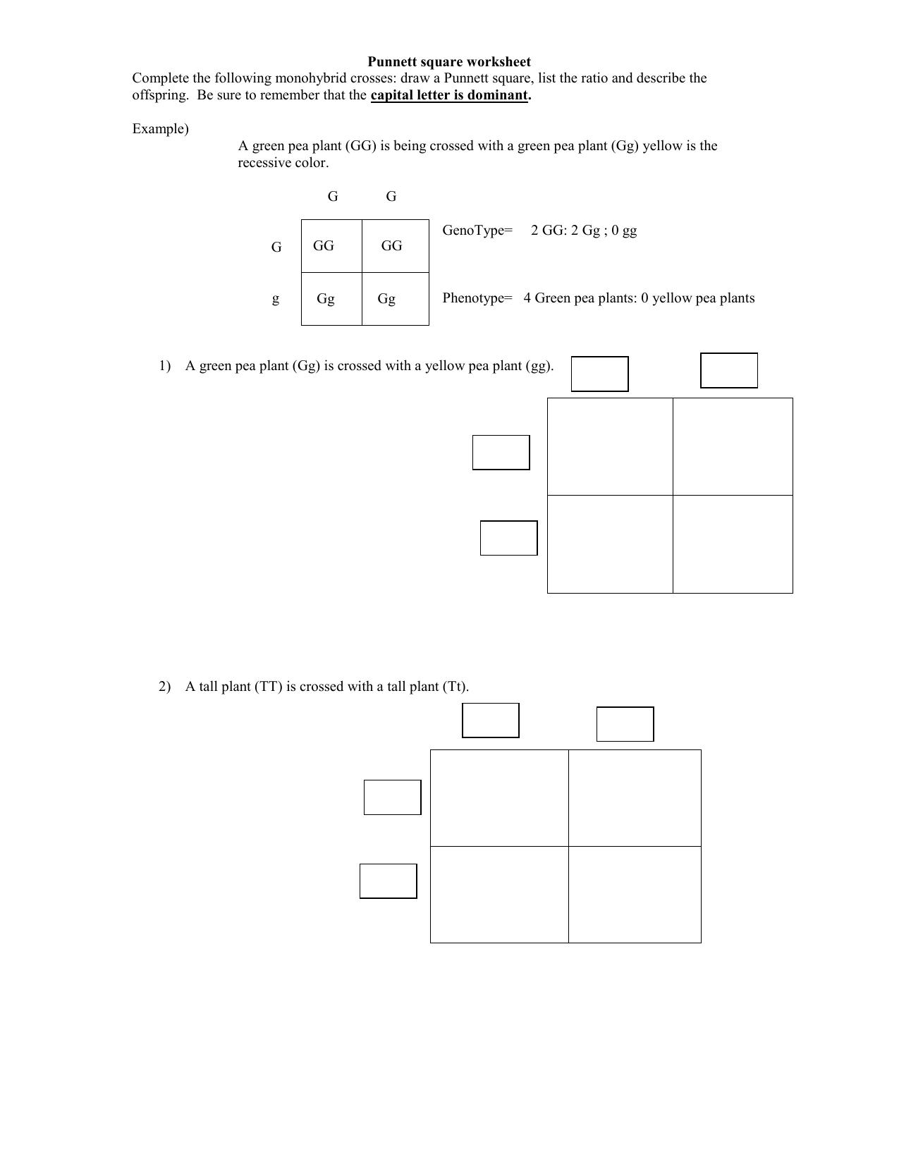 Punnettsquareworksheet1