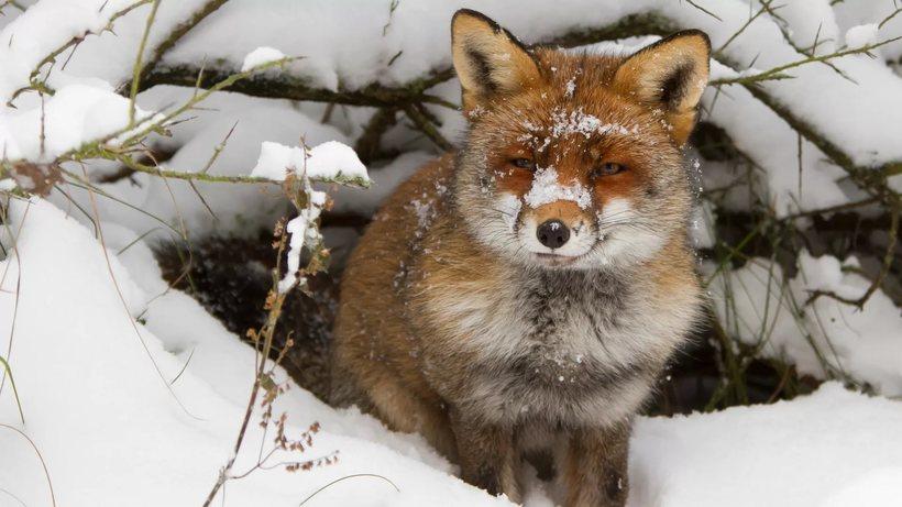 Животные готовятся к зиме картинки для детей