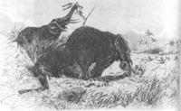 Амазонки Дагомеи — самые грозные воительницы, державшие всех в страхе два столетия' data-image='' data-src='http://s6.travelask.ru/system/images/files/001/068/340/wysiwyg/8.jpg?1523441609