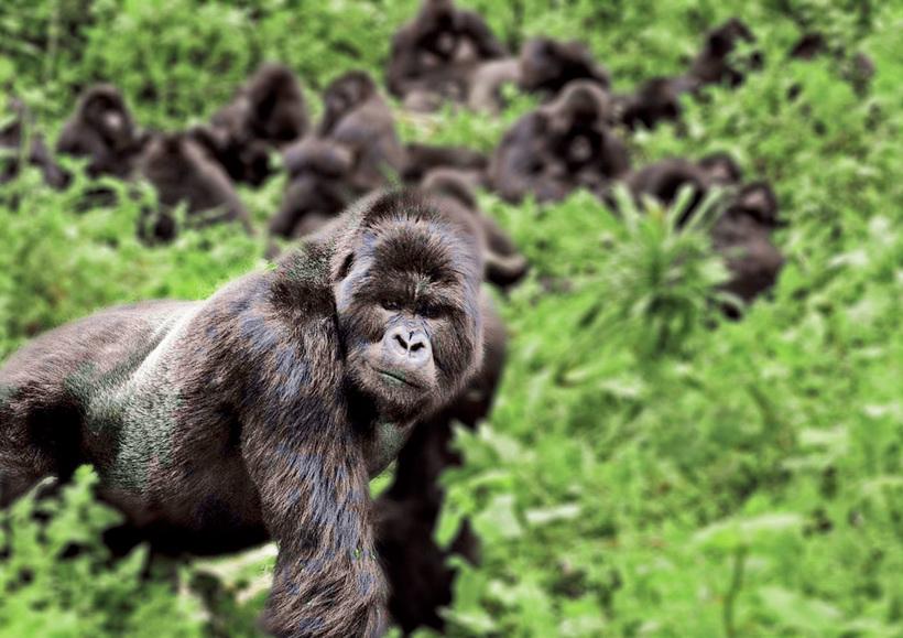 Наблюдение за гориллами и еще 14 нестандартных идей для любителей приключений