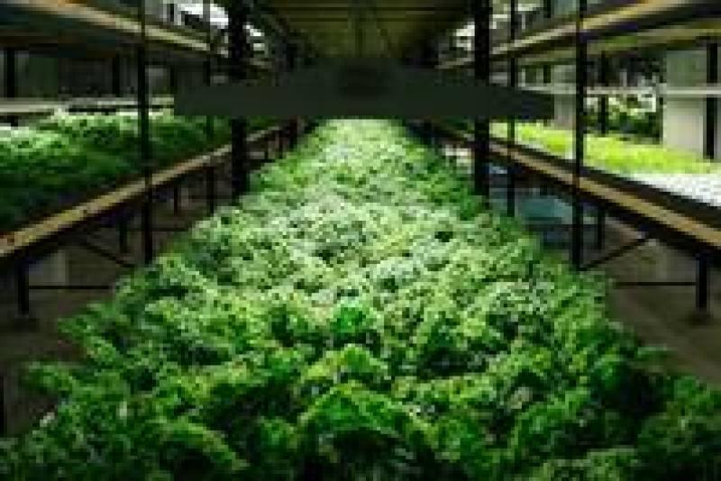 Комплекс Urban Organics: уникальная городская ферма по выращиванию овощей и рыбы