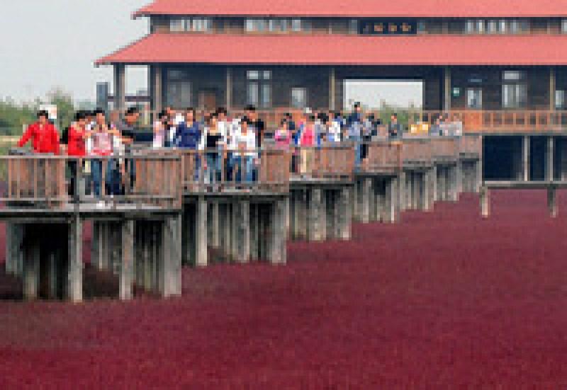 Место инопланетной красоты: Красный пляж в Китае, который похож на багряный ковер