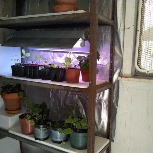 Turn A Spare Room Into Grow, How To Turn Your Basement Into A Greenhouse