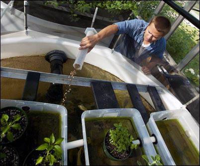 hydroponic roots, hydroponics, aquaponics, hydroponic system, setting up a hydroponic system, setting up an aquaponic system, homesteading, homestead