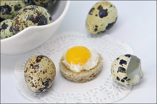 quail eggs, small-scale quail farming, popular quail breeds, Japanese quail, Bobwhite quail, homesteading