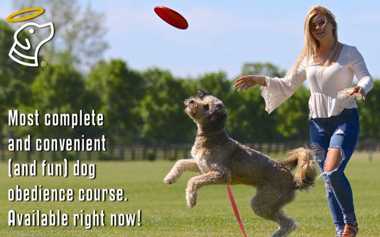 Most complete and convenient (and fun) dog obedience course available.