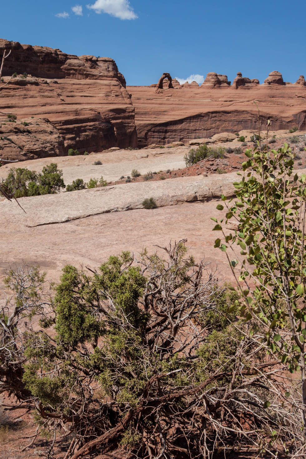 Delicate Arch, Arches National Park, Moab, Utah #vezzaniphotography