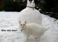 Winter_Humor_2013_11