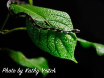 Photo by Kathy Veitch