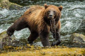 Brown-Bear-Alaska-7