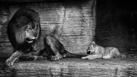 ©Joshua Sommerfeldt