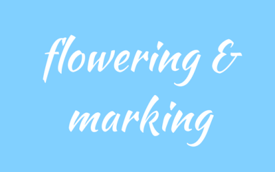 Flowering and marking