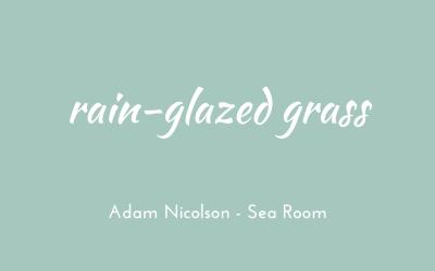 Rain-glazed grass