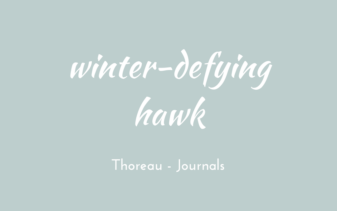Thoreau - Journal - winter-defying hawk