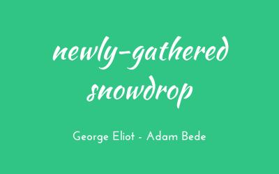 Newly-gathered snowdrop