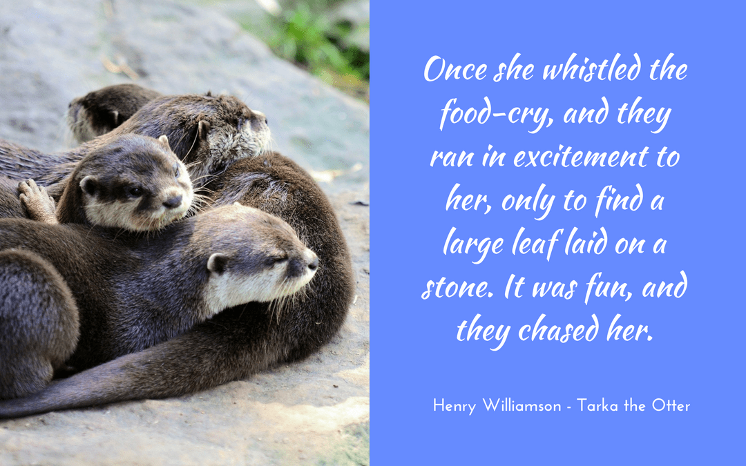 otters, play, playful, Henry Williamson - Tarka the Otter - quotation