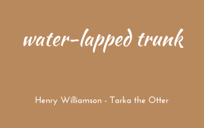 Water-lapped trunk