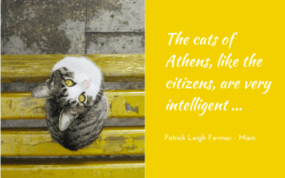My kinda cat – III