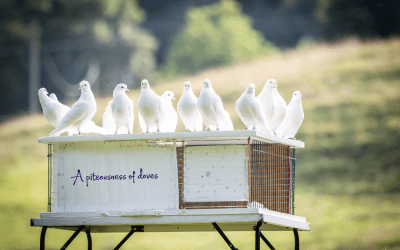 A piteousness of doves