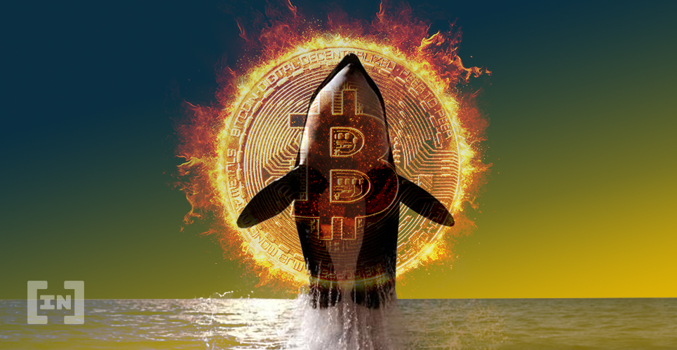 Bitcoin gets cheaper as the whale moves another $ 450 million for just $ 0.25 - BeInCrypto
