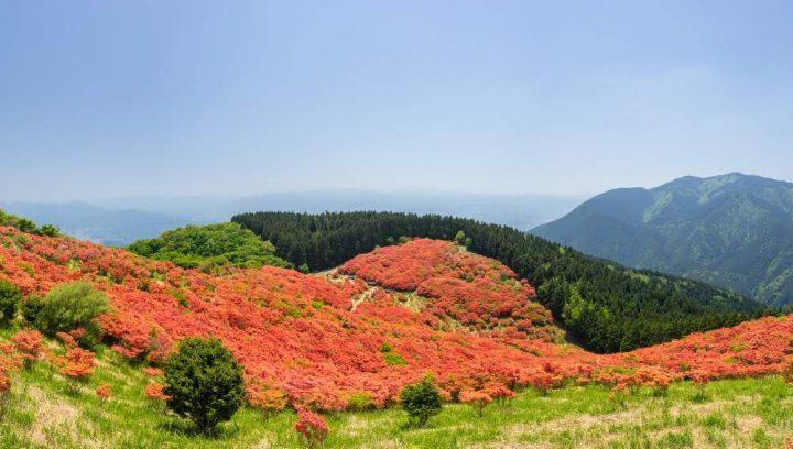 50d670f092 奈良県と大阪府の県境にまたがる大和葛城山(やまとかつらぎさん)は、北の二上山や南の金剛山に連なる金剛山地の1つで、標高952mの豊かな自然 あふれる山です。