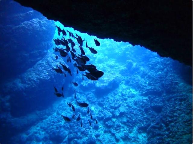 洞窟の中にも魚がいっぱい!photo by そとあそび