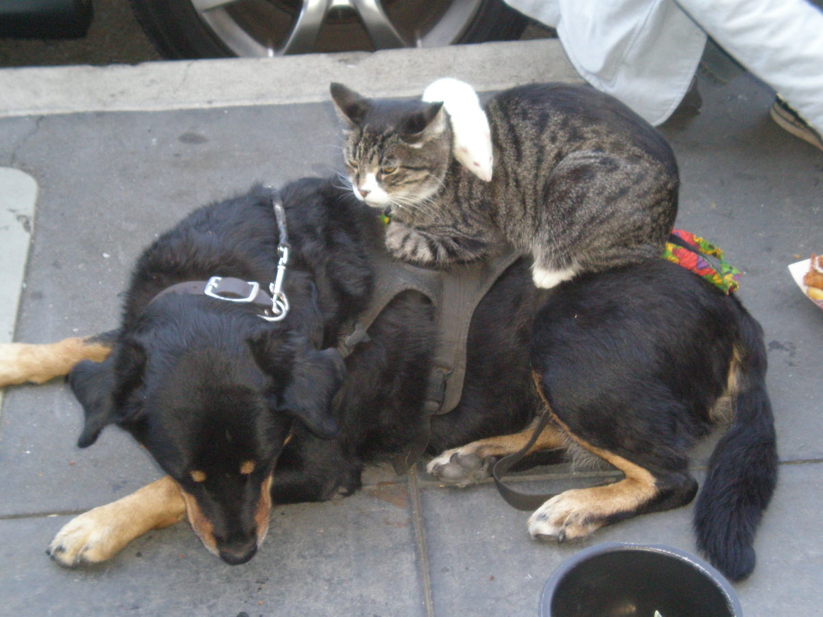 Cat and Dog at Fisherman's Wharf -  BrokenSphere / Wikimedia Commons.