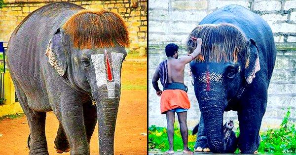Tamilnadu Elephant Special Hairstyle - WorldWonders