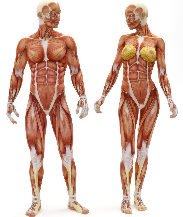 Resultado de imagen para cuerpo humano