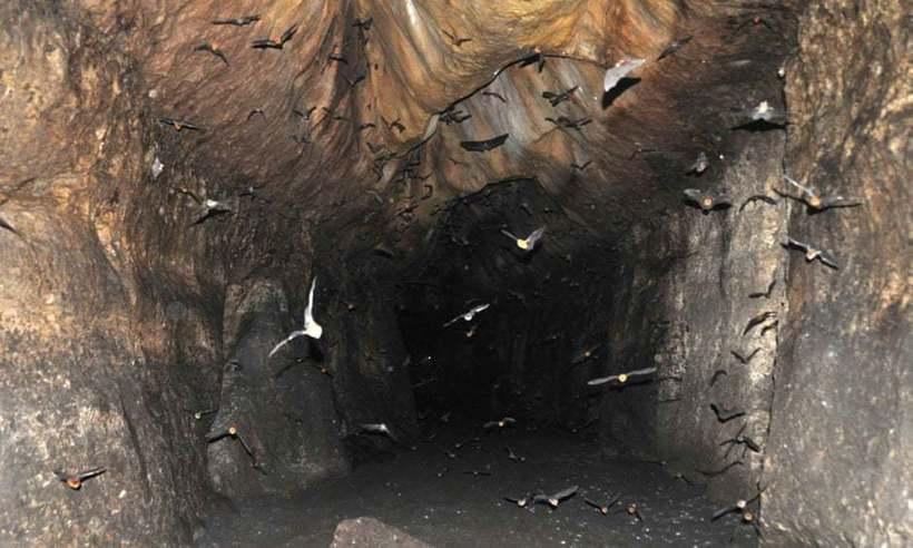 Оранжевые пещерные крокодилы, которые мутируют в новый вид
