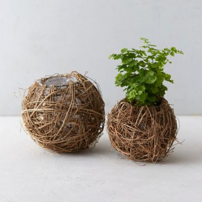 Planters Outdoor Decor