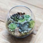 Succulent Round Terrarium Terrain