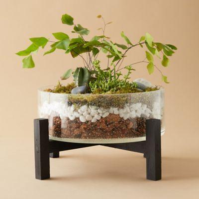 Best 43 Inspiration Stylish Bonsai Terrarium Ideas With Miniature Landscaping Jars