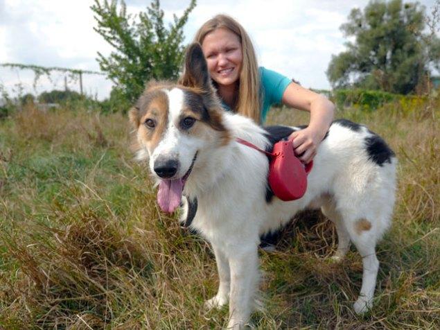"""Як рекламувати безпритульну тварину: поради для """"маленьких"""" волонтерів"""