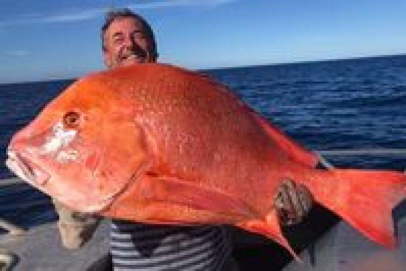 Мечта любого рыбака: в Австралии выловили гигантскую рыбу