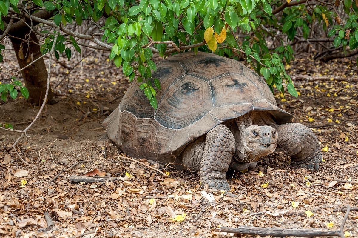 The 14 Most Unique Galapagos Animals