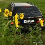 Paul in the sunflower field.