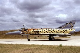 cheetah spot