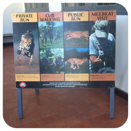 Cheetah Outreach activities in Somerset West