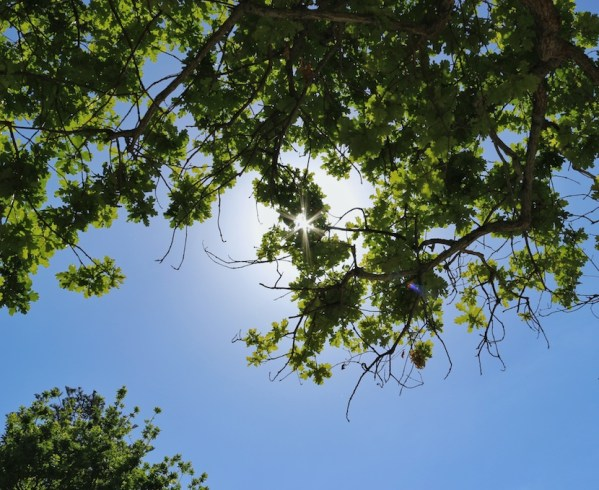 Sunlight through the leaves of trees at Groot Constantia